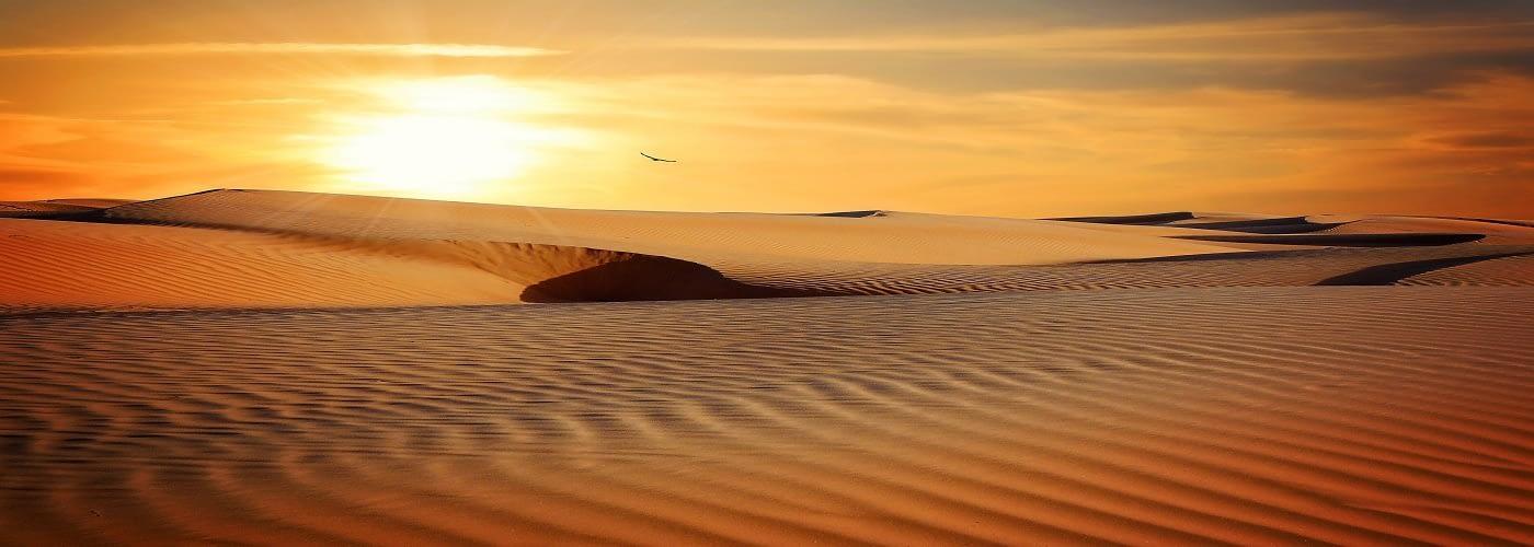 Budget Desert Safari Dubai 2020