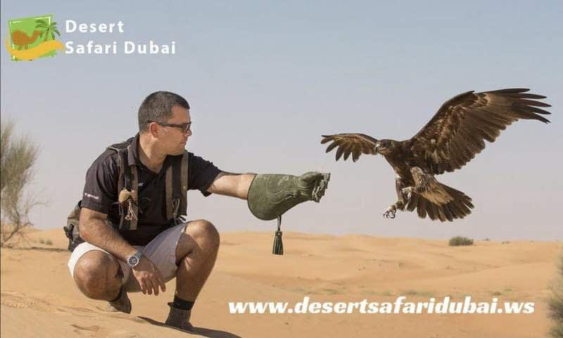 Desert Safari Dubai with falconeering